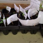 plantjes zaaien thema groeien en bloeien