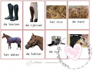 woordkaarten paard van sinterklaas