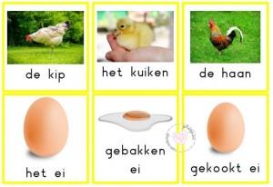 woordkaarten kip en haar kuikens