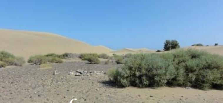 Op reis vanuit Egypte door de woestijn…